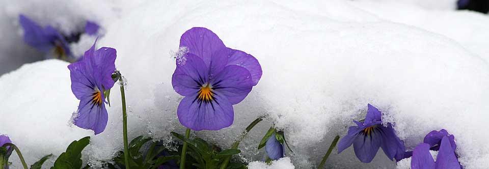 Kawartha Blooms