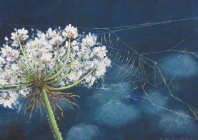 Queen Annes Lace by C. Joy McCallister
