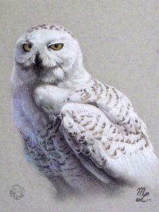 Snowy Owl (pastel) by Markus Leydolt