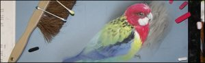 Rosella Progression (pastel) by Markus Leydolt