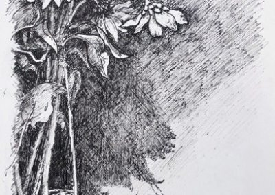 Lesley Drummond - Andrea's Sunflowers (ink on paper)