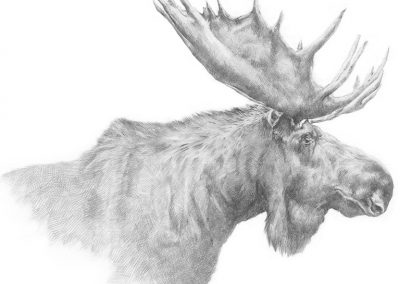 M-J Kelley - Moose (graphite)
