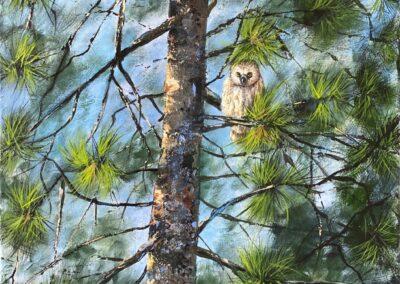Joy McCallister - Saw-whet Owl - Acrylics
